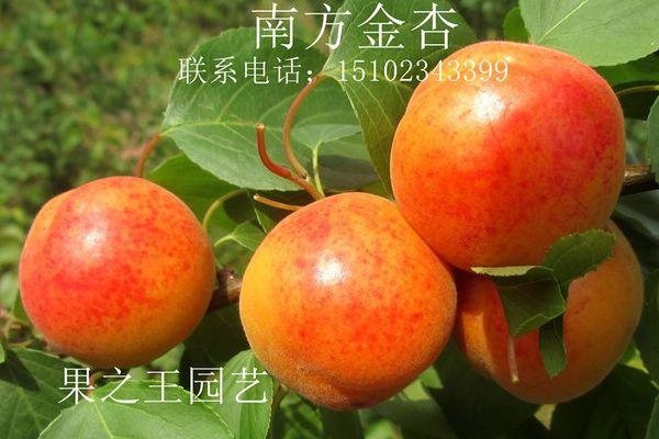 南方金杏2013广3.jpg